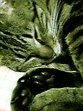 猫にゃん肉球